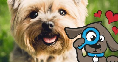 Hondenverzekering? 40 Redenen om je hond wel of niet te verzekeren